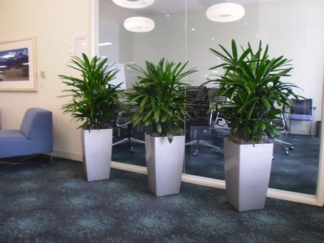 Gallery interior plant design for Interior designs with plants